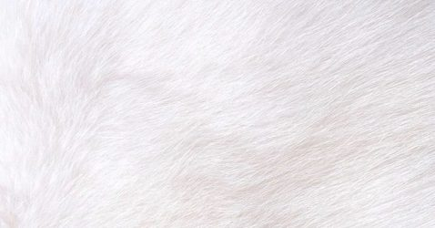 White Iphone Wallpapers