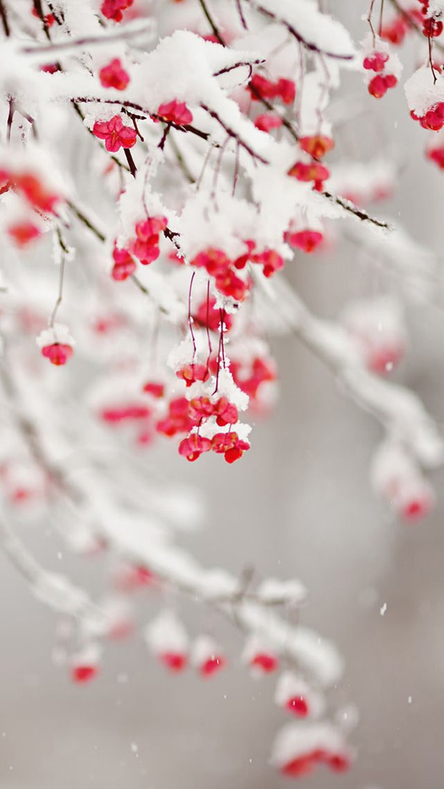 Winter Iphone Wallpaper