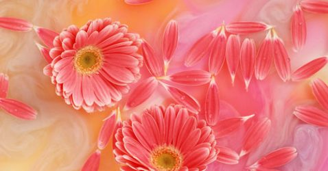 Www Download Flowers Wallpaper Com