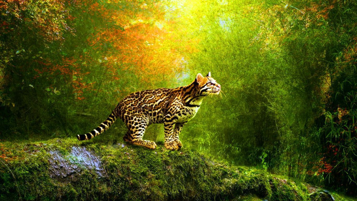 3D Animated Wallpapers