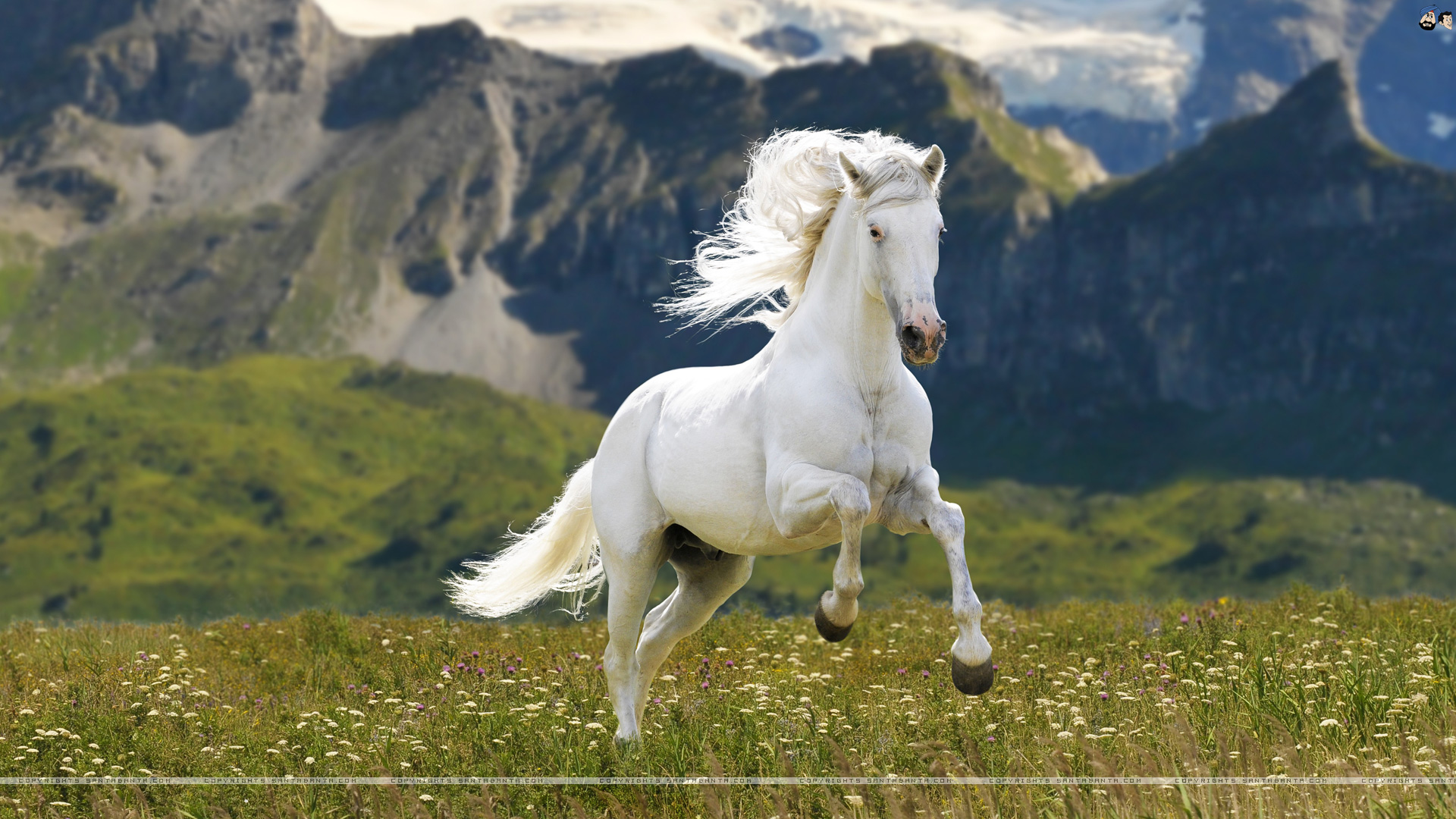 Download 3d Beautiful White Horse Wallpaper Gallery
