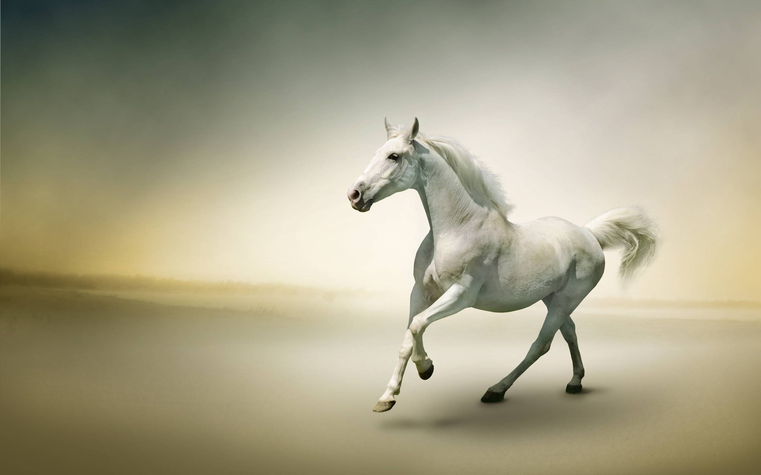 3D Beautiful White Horse Wallpaper