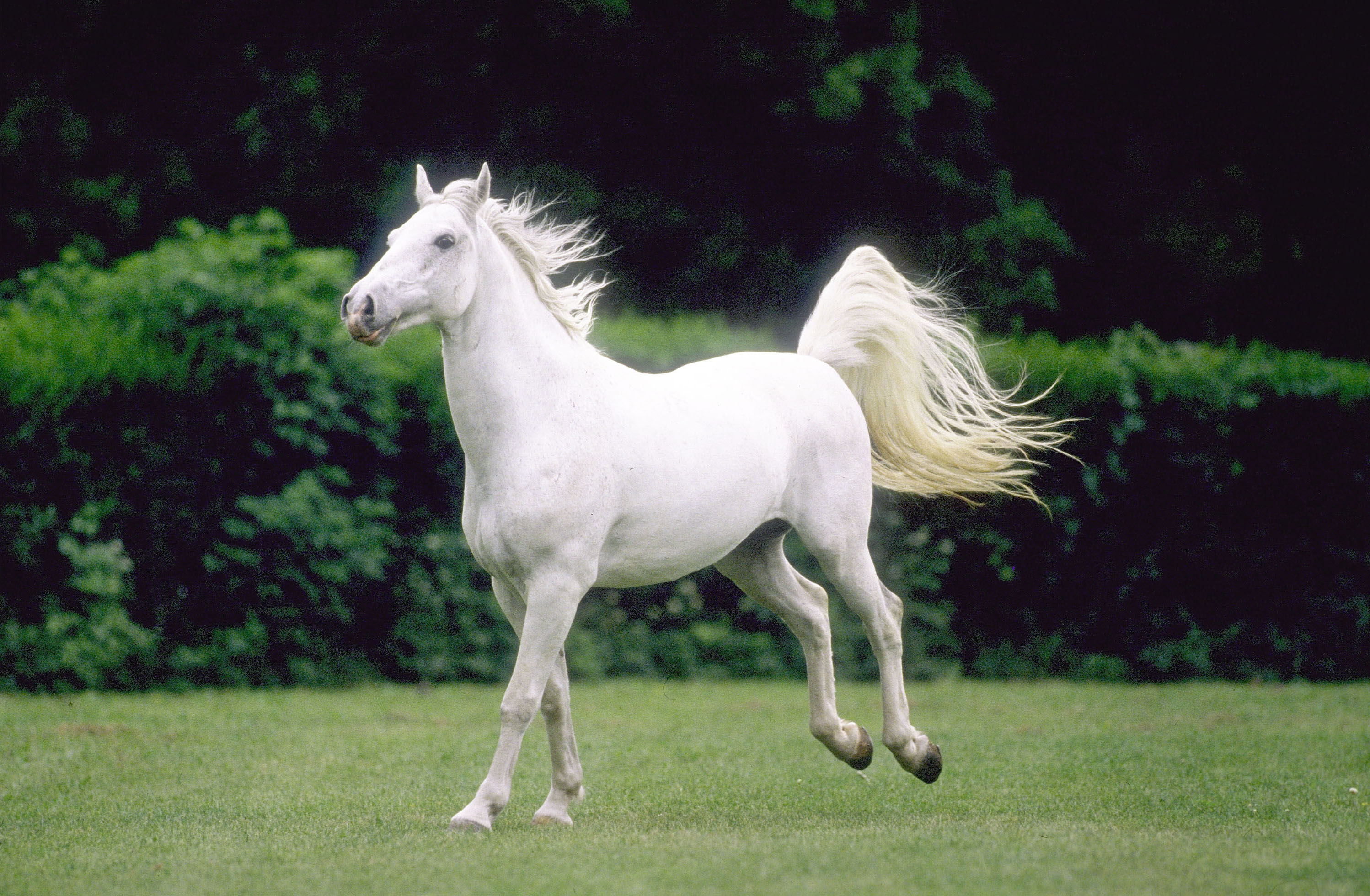 3D Horse Wallpapers Free Download