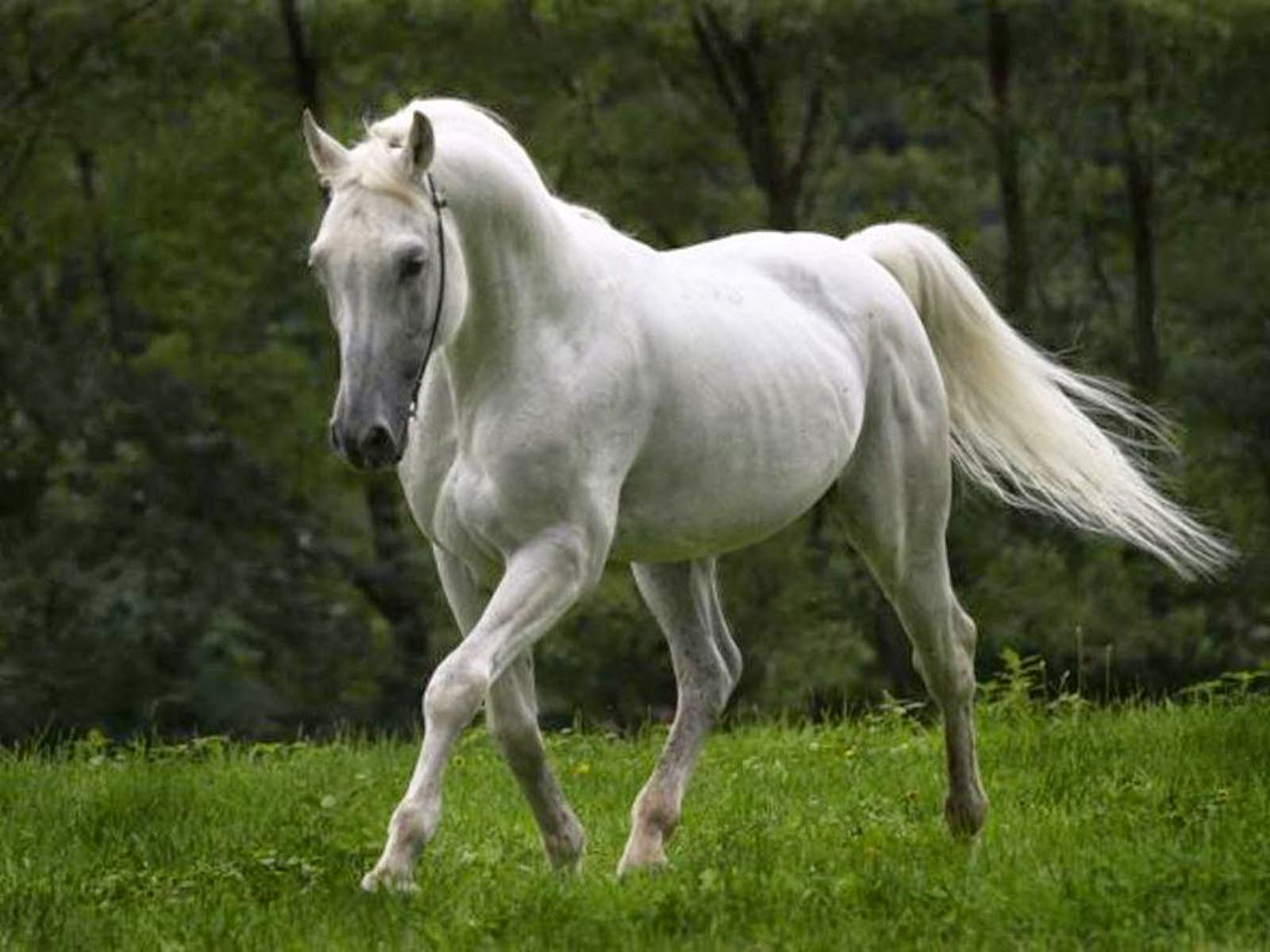 Download 3d Horse Wallpapers Free Download Gallery