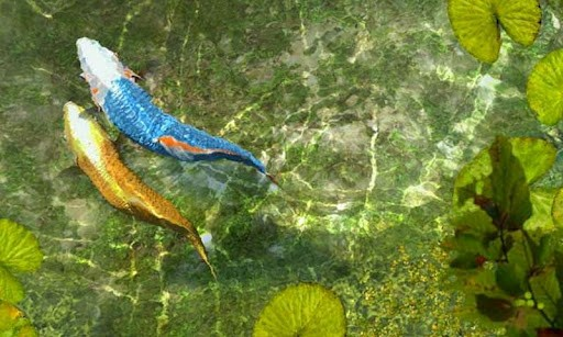 Download 3d koi fish live wallpaper gallery - 3d koi pond live wallpaper iphone ...