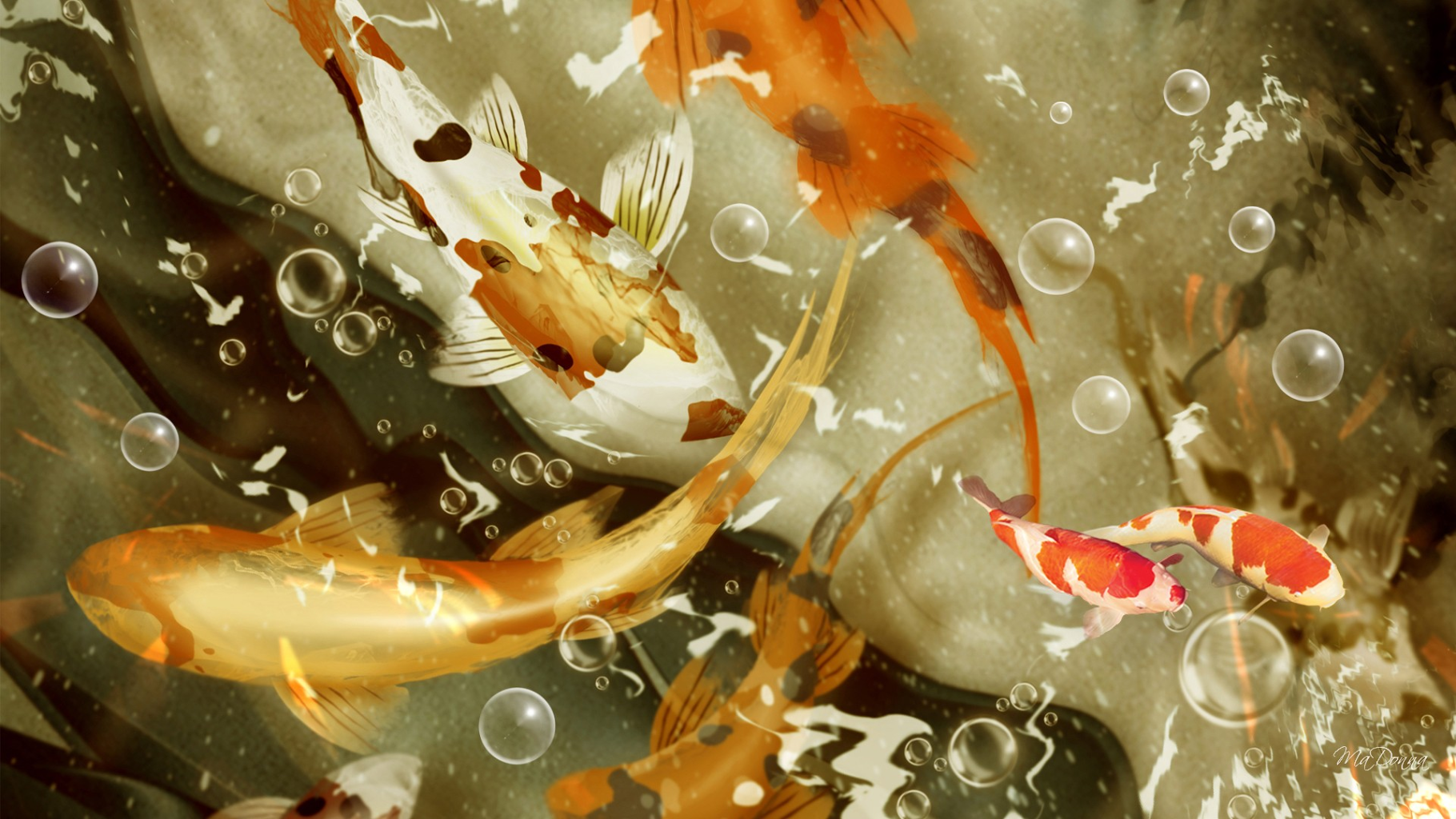 3D Koi Fish Live Wallpaper