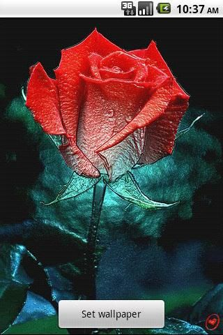 3D Rose Live Wallpaper Apk