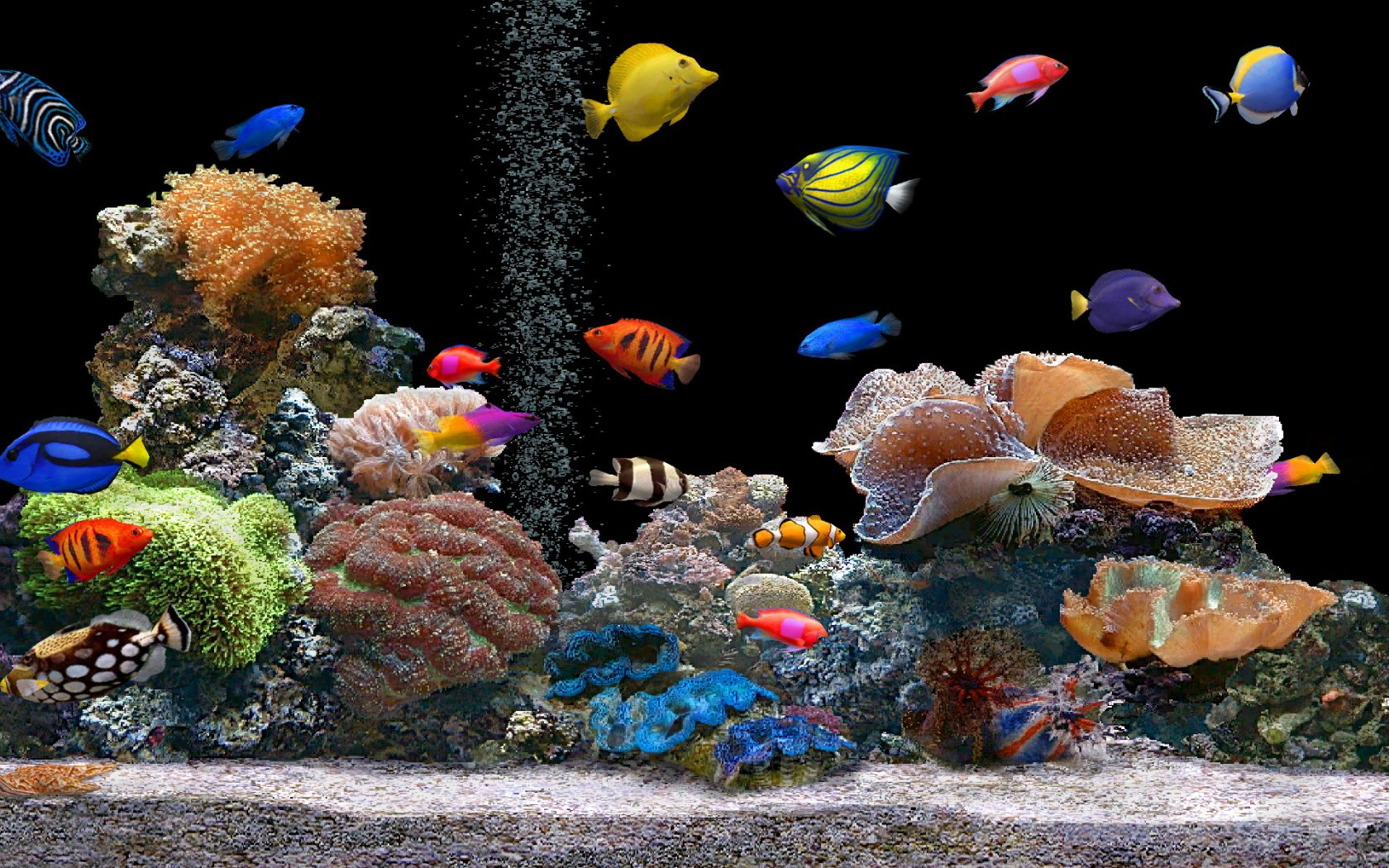 3D Wallpaper Fish Tank