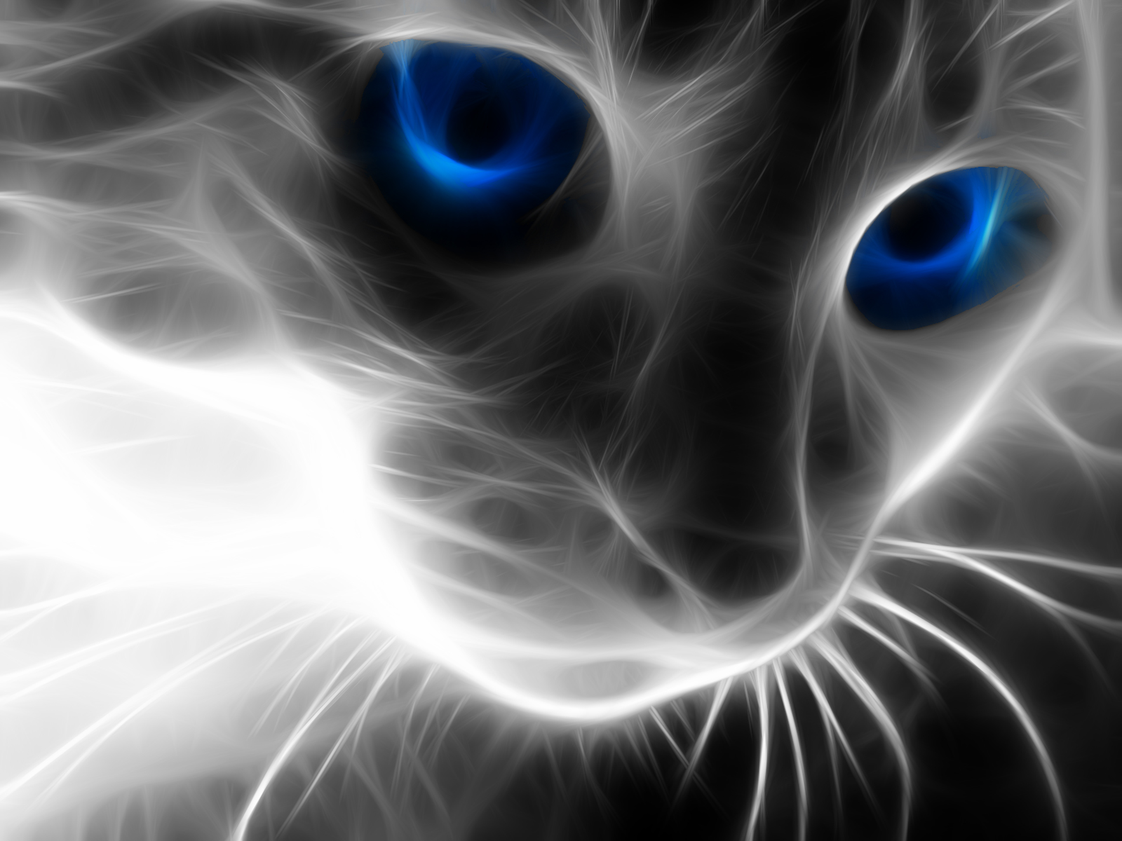 Amazing Cat Wallpapers