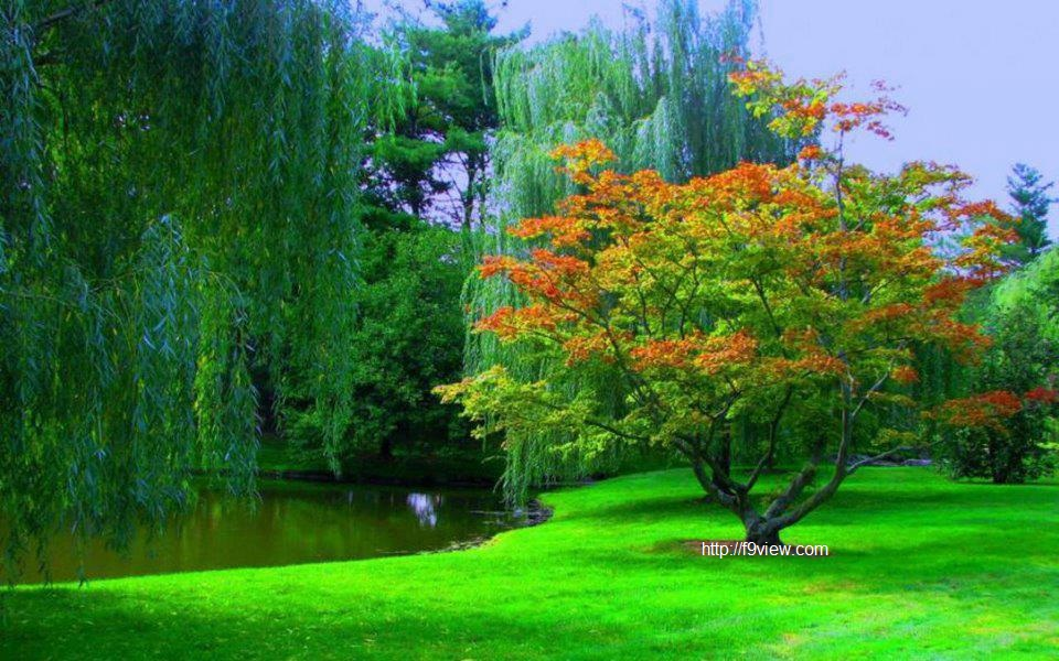 Amazing Nature Wallpapers Free Download