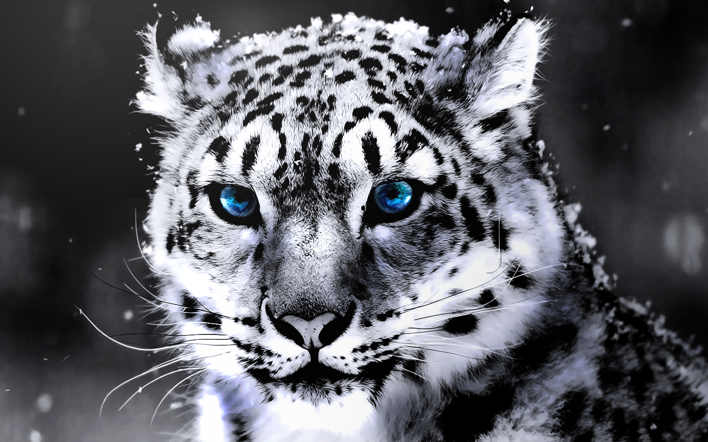 Amazing Wallpaper Marvel White Tiger - Amazing-White-Tiger-Wallpaper-2  You Should Have_25218.jpg
