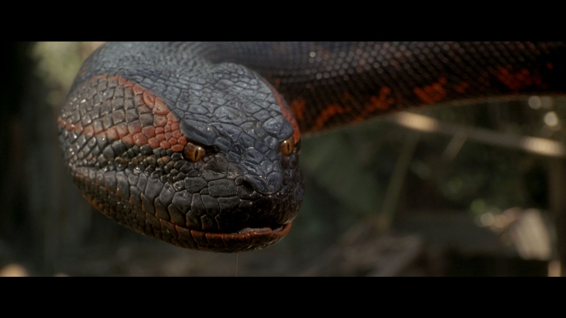 Anaconda Movie Wallpaper