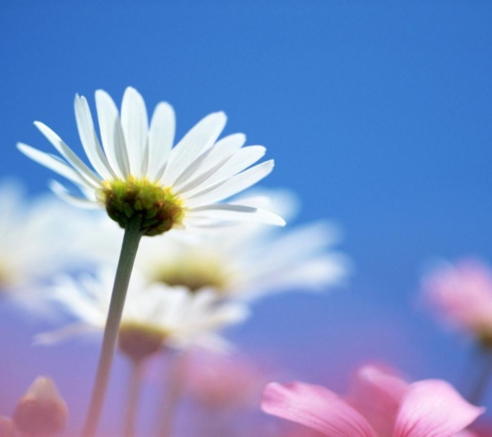 Download Android Wallpaper Flowers Gallery