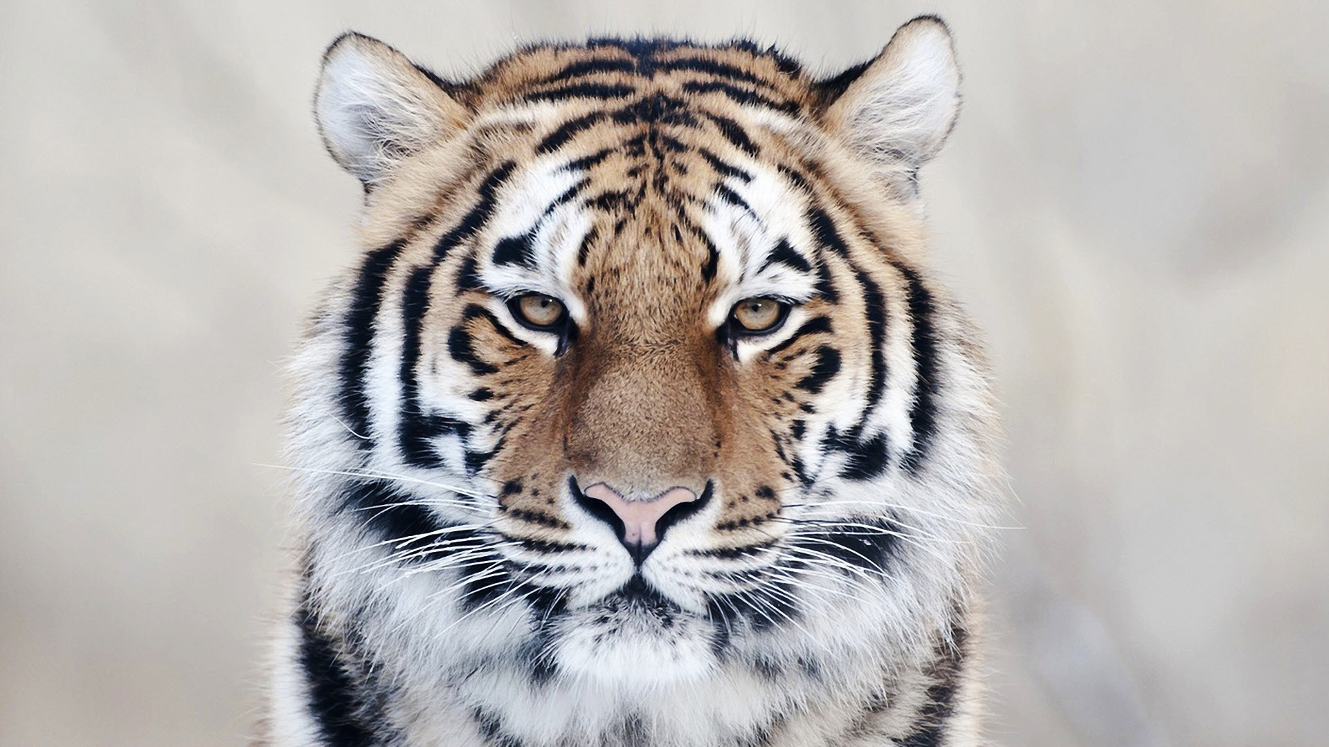 Download Animal Face Wallpaper Gallery