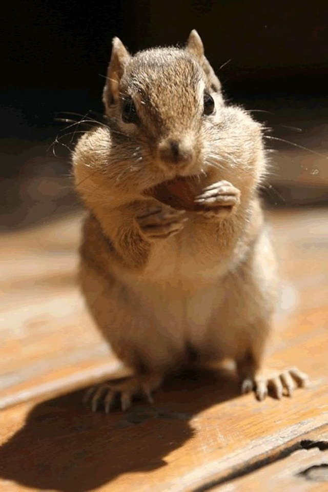 Download animal phone wallpaper gallery - The cutest wallpaper ...
