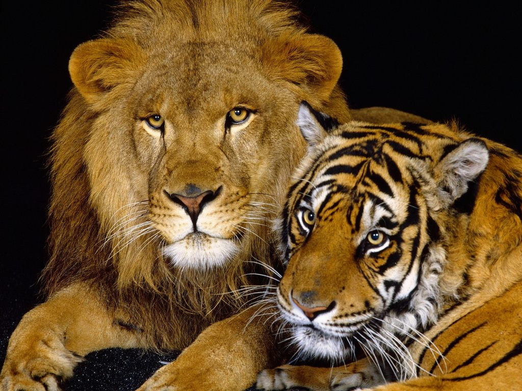 download animal wallpapers free gallery