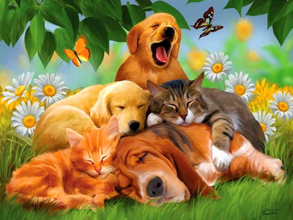 download animals hd wallpapers gallery