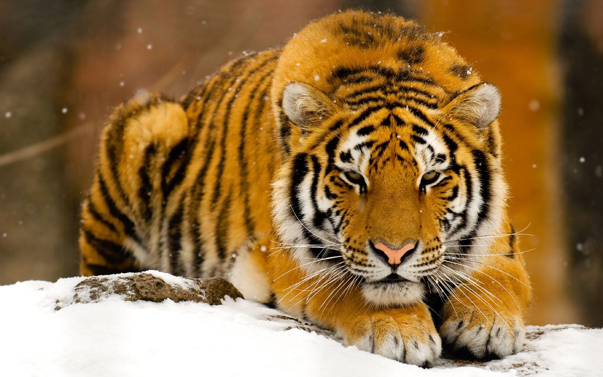 Animals HD Wallpapers