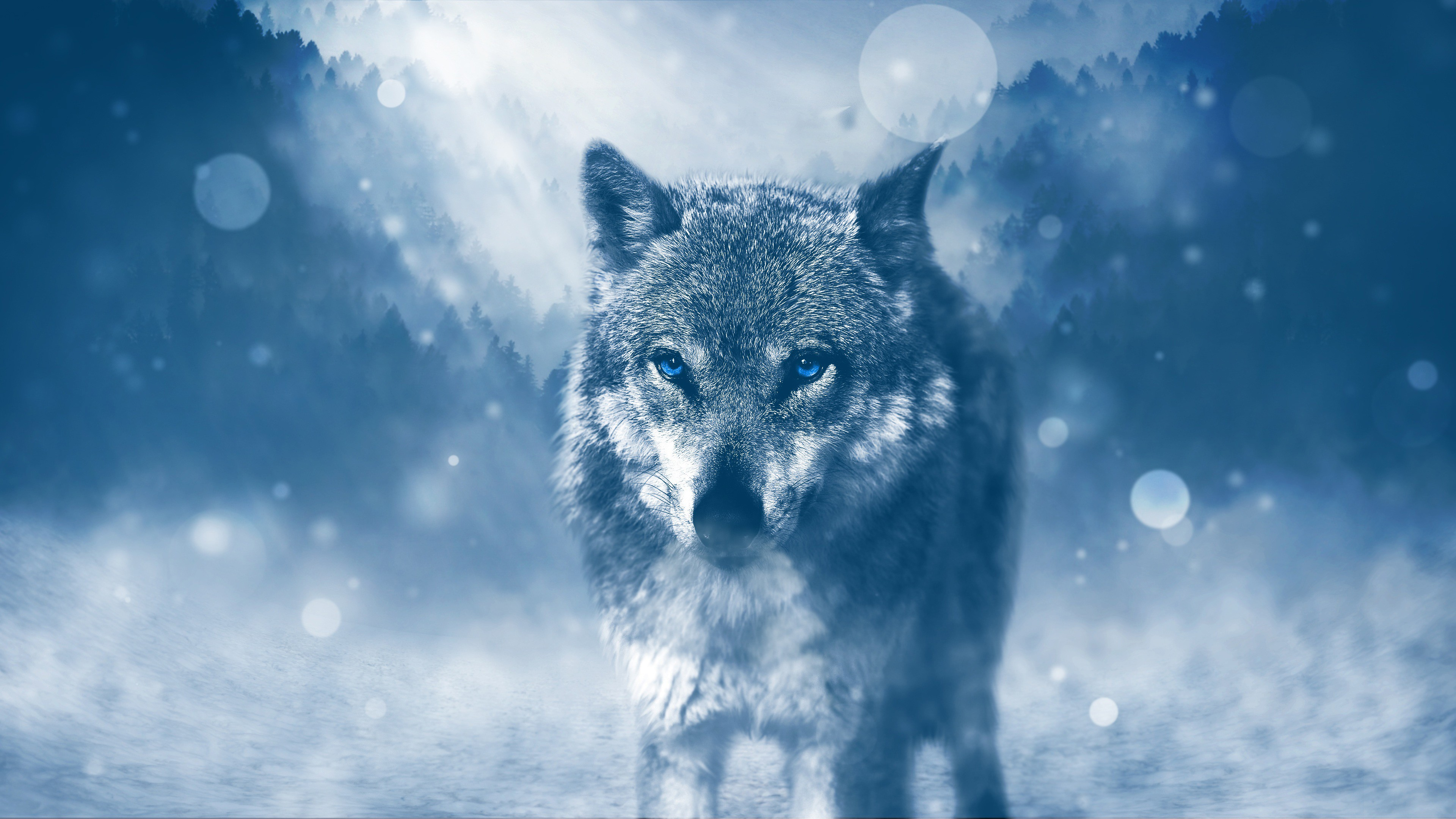 Animals Wallpapers