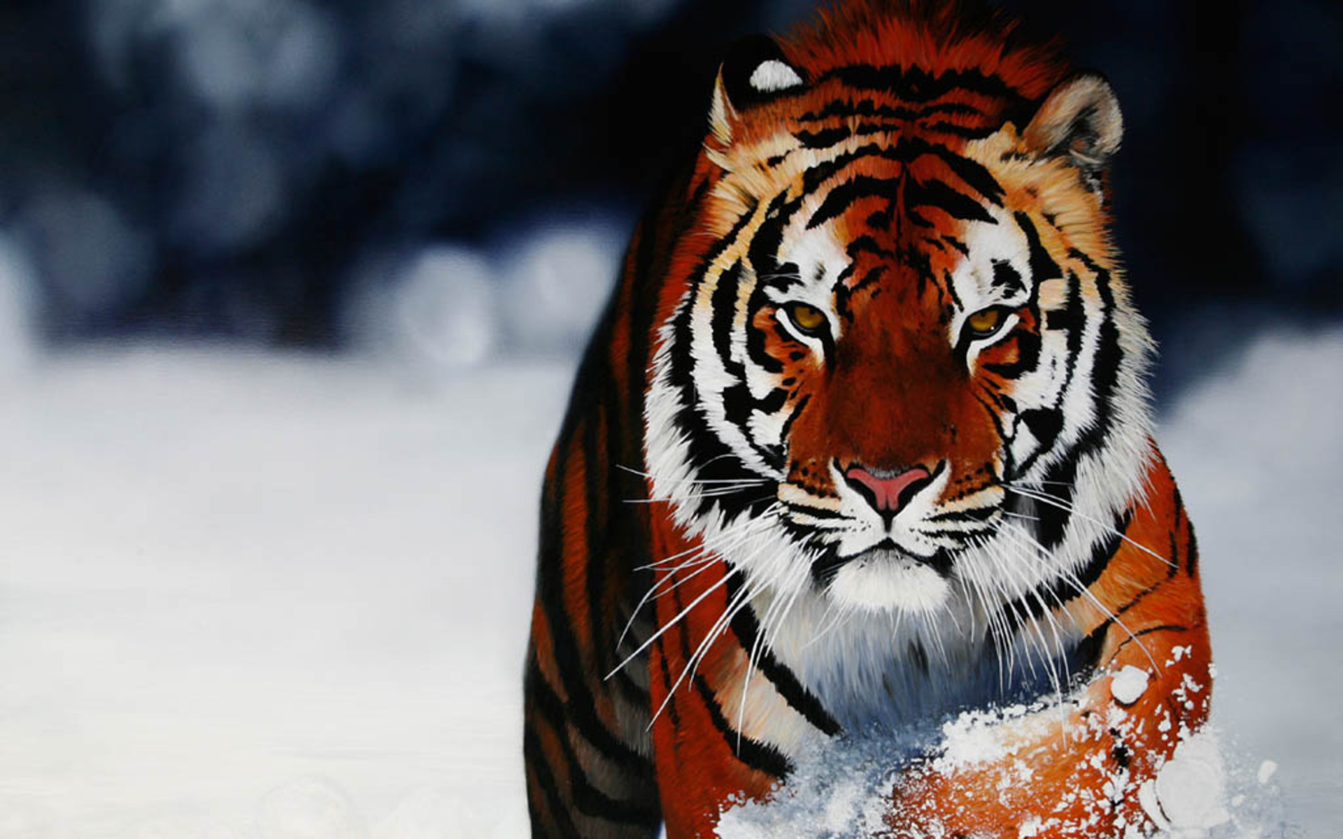 Animals Wallpapers HD