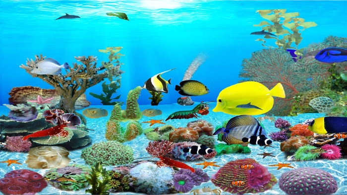 fish live wallpaper for windows xp free download