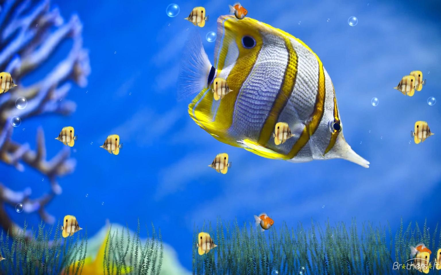 Animated Aquarium Wallpaper For Windows 7 Free