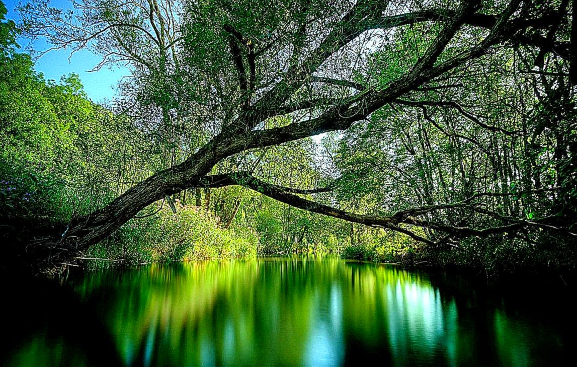 Animated Nature Wallpaper For Windows 7