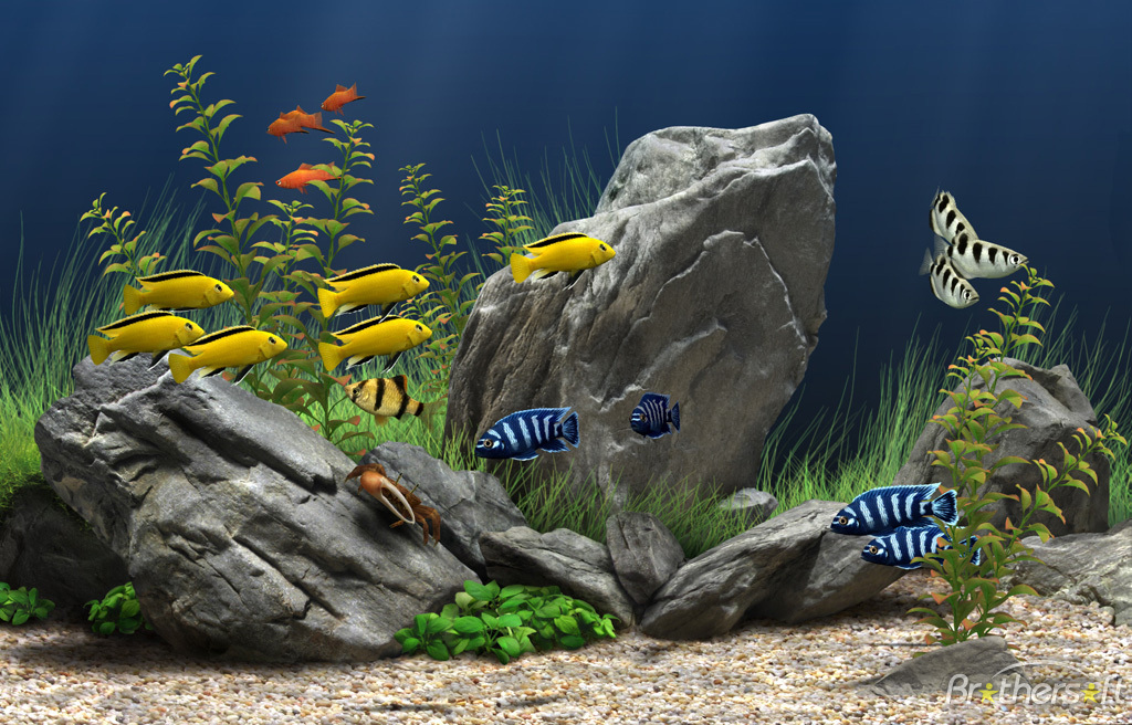 Aquarium Fish Wallpaper Free Download