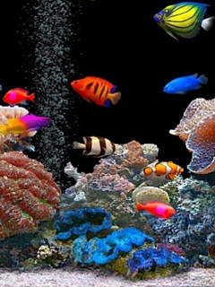 Aquarium Wallpaper For Mobile