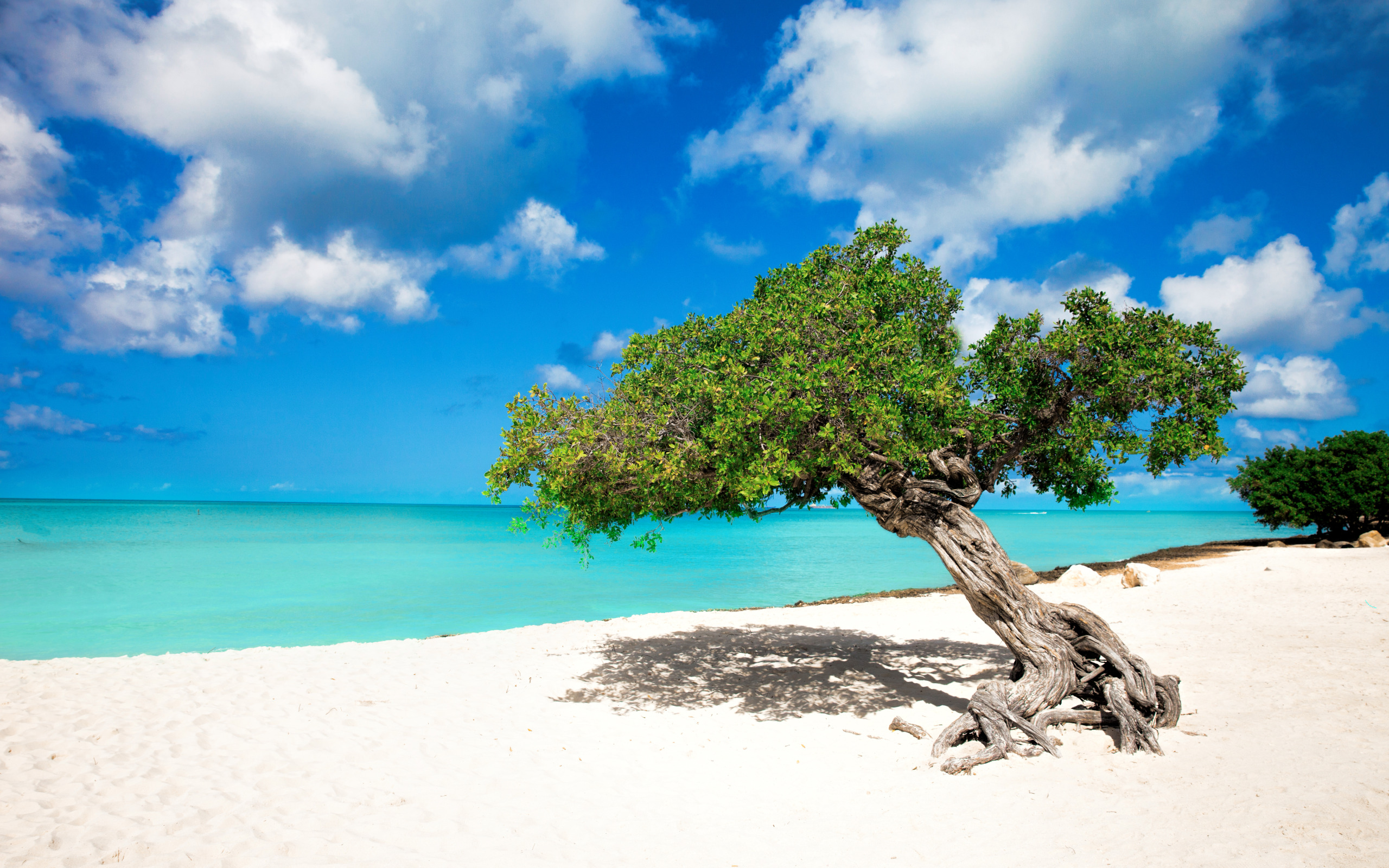 Aruba Beach Wallpaper