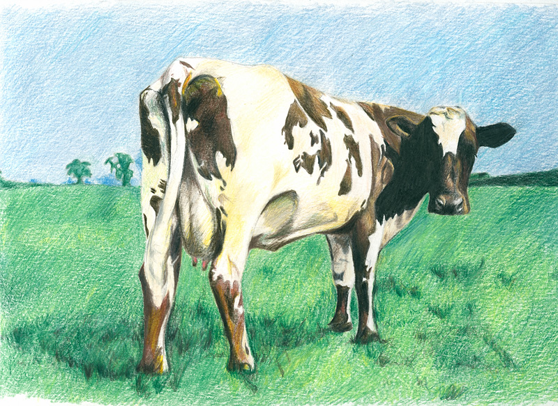 Atom Heart Mother Wallpaper