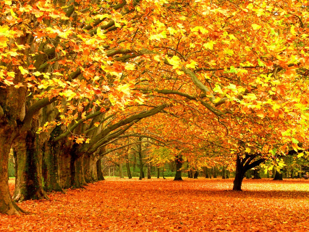 Autumn Nature Wallpaper