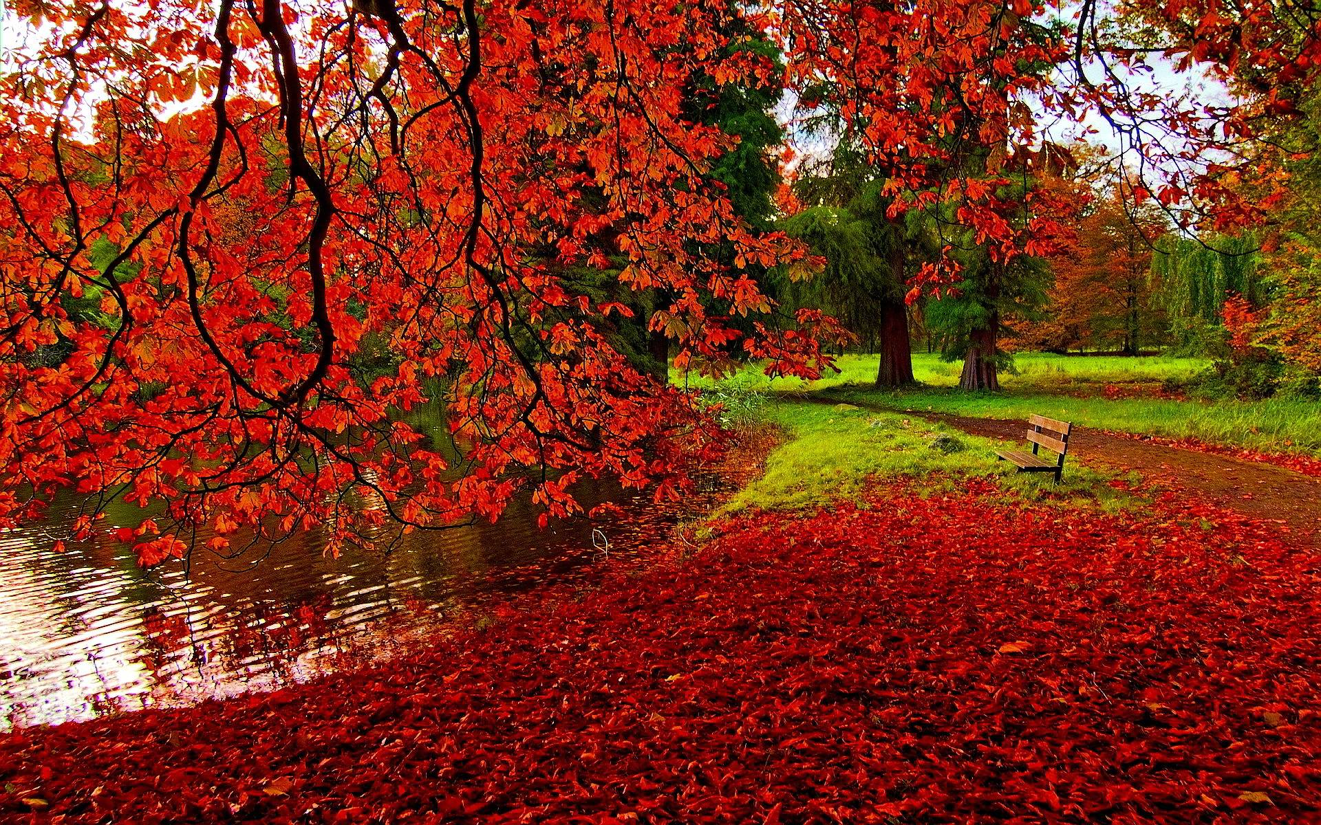 Autumn Wallpaper Full HD
