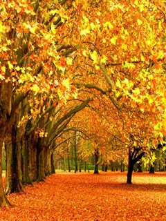 Autumn Wallpapers For Mobile