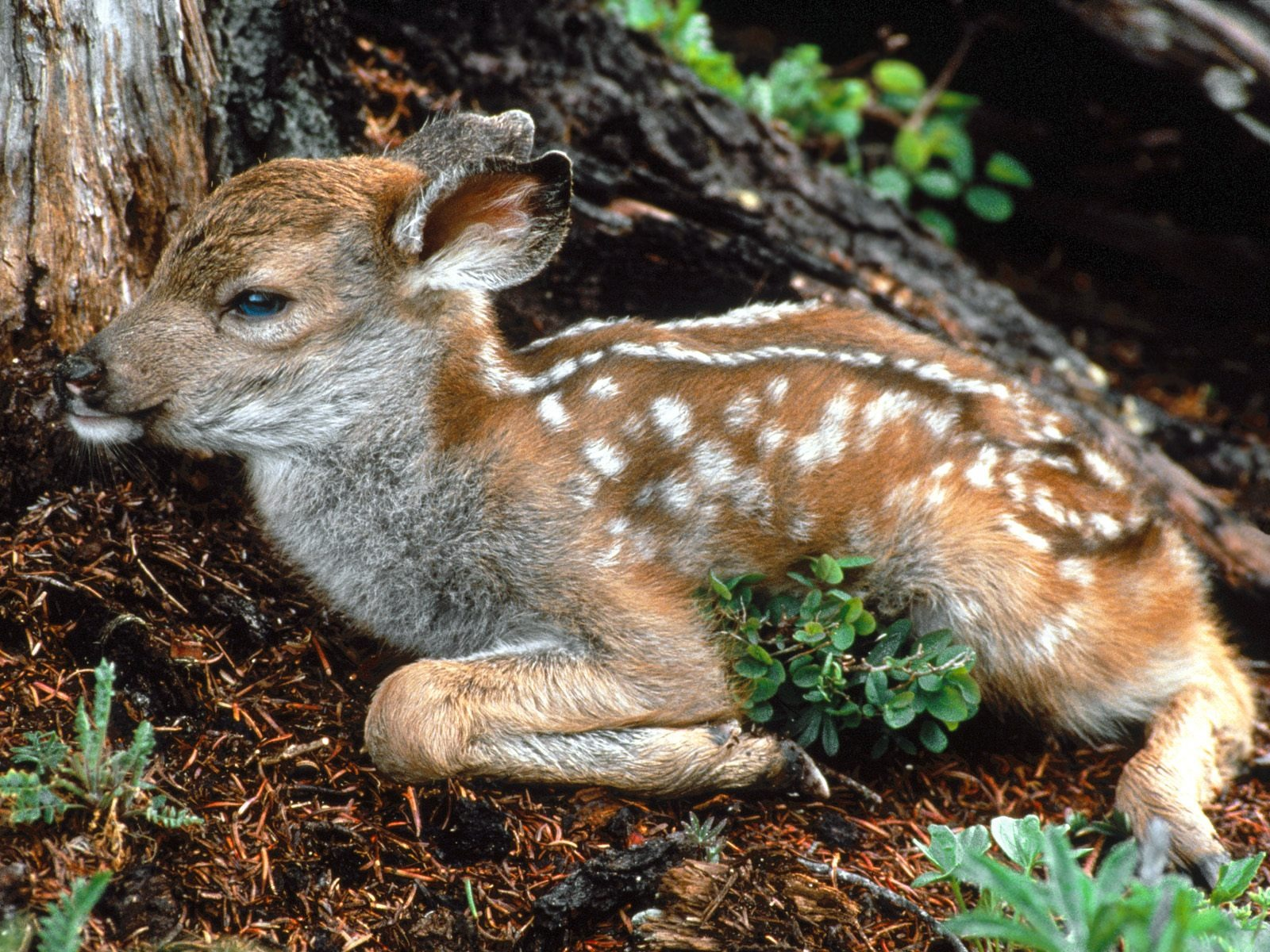 Baby Animals Wallpapers