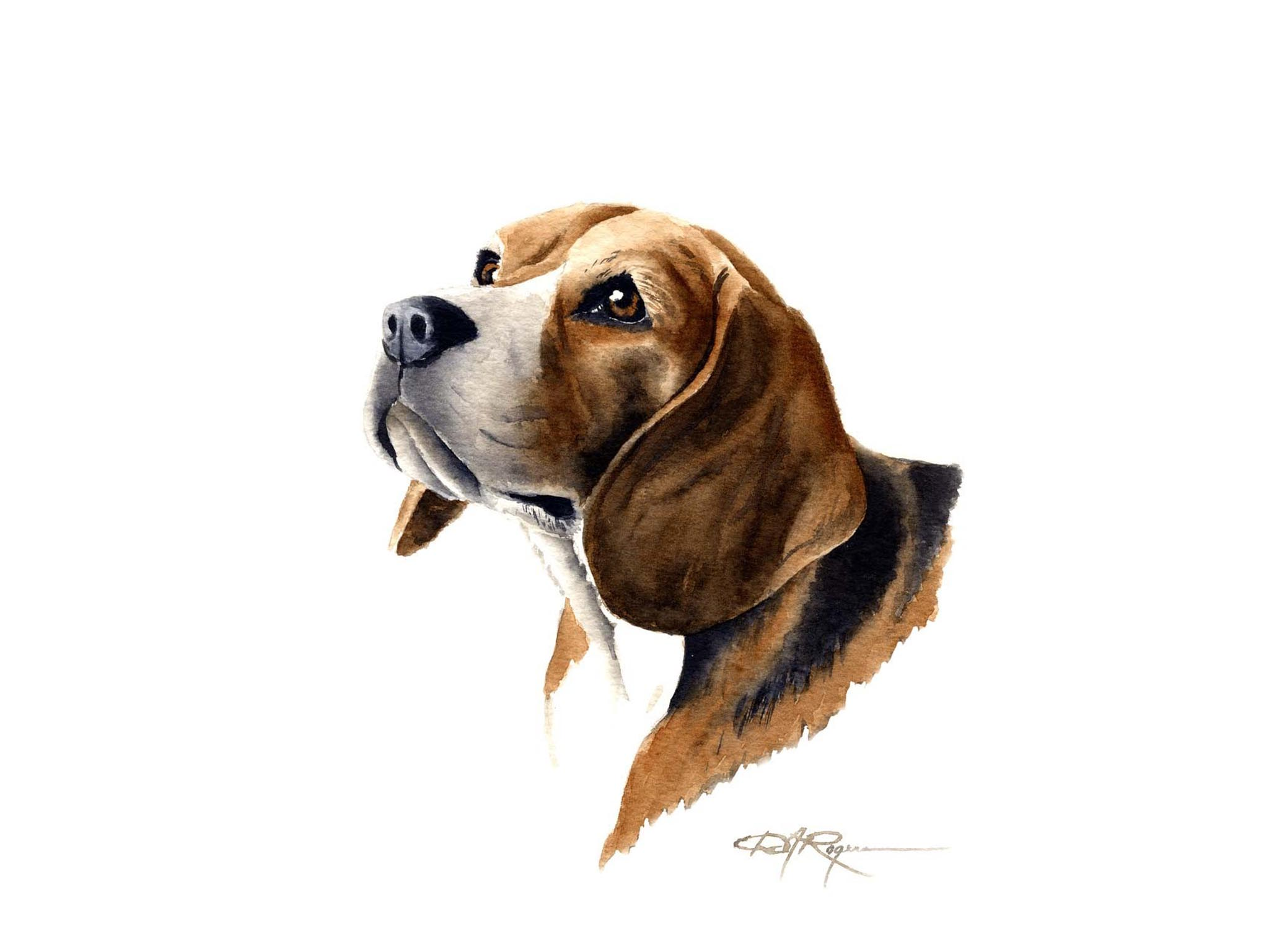 download beagle dog wallpaper gallery