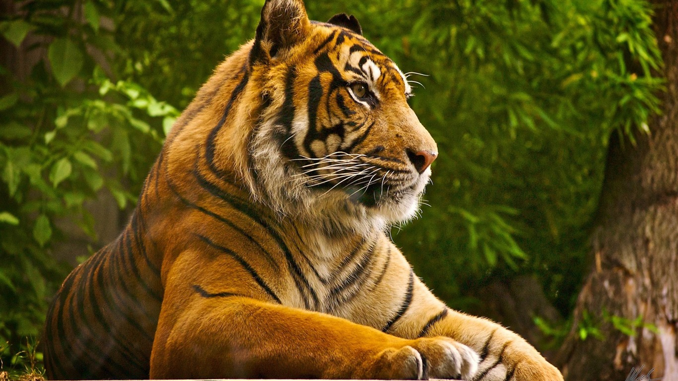 Beautiful Animals Wallpaper