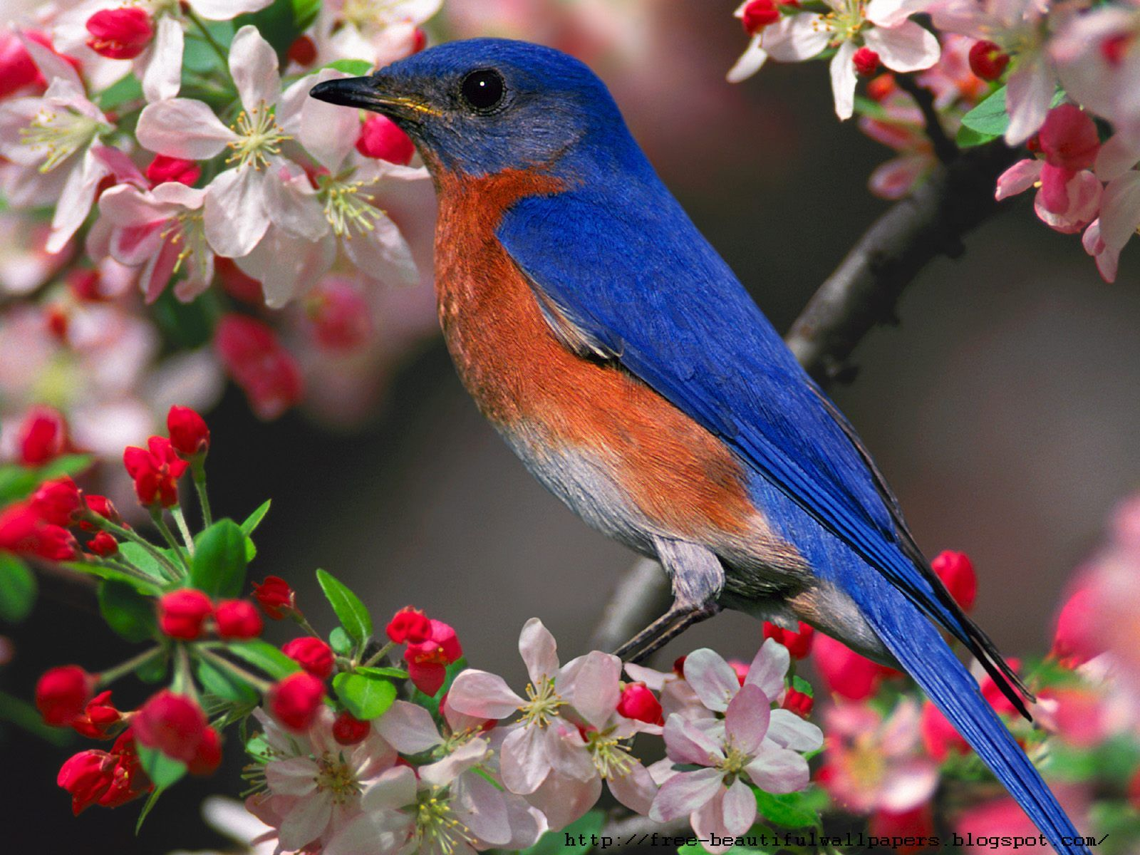 Beautiful Birds Wallpaper Download