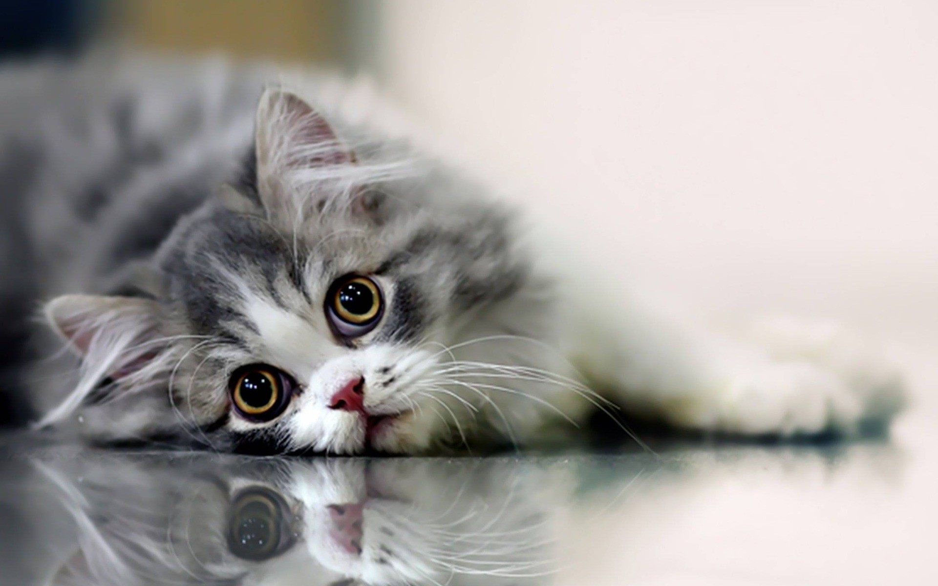 Beautiful Cats HD Wallpapers