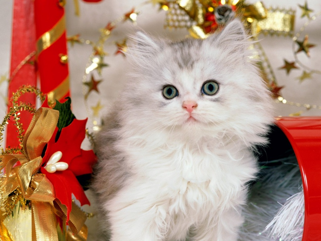 Beautiful Cats Wallpapers Download