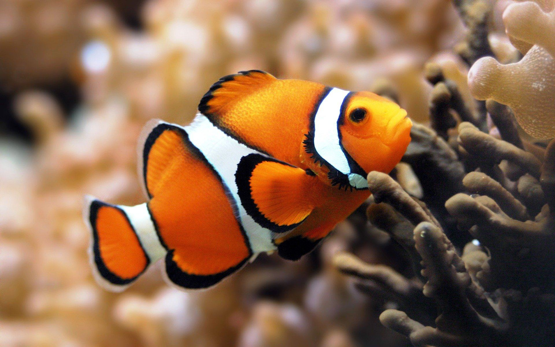 Beautiful Fish Wallpapers Underwater