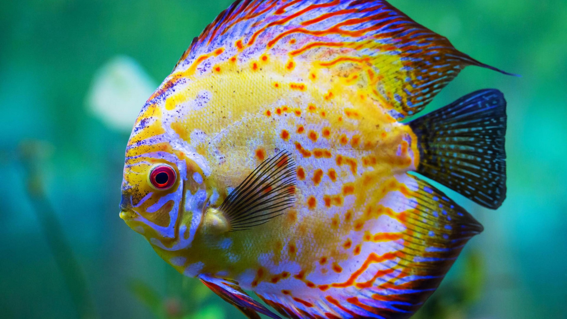 Beautiful Fishes HD Wallpapers