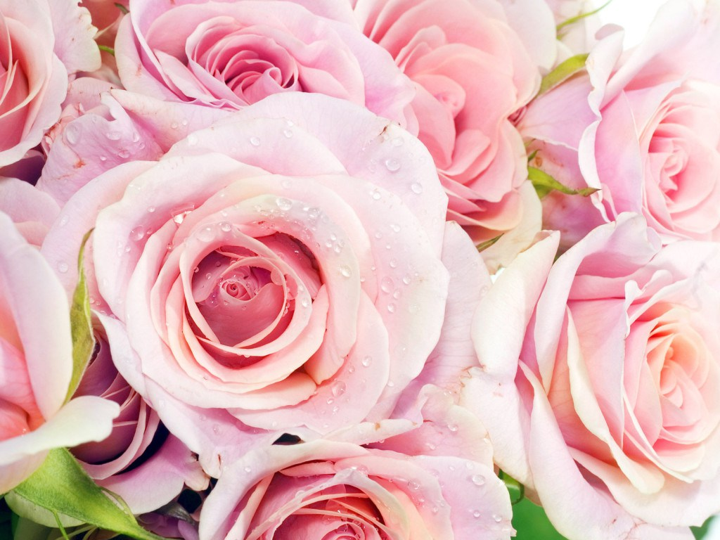 Download Beautiful Flowers Download Wallpapers Gallery