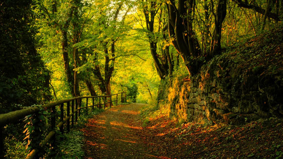 Beautiful Forest Wallpapers