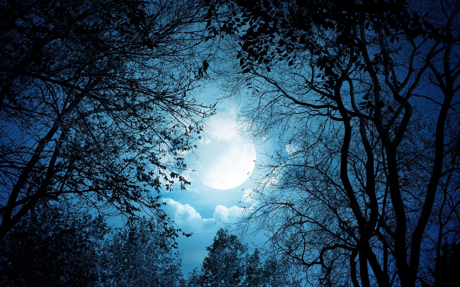 Download Beautiful Moon Night Wallpapers Gallery