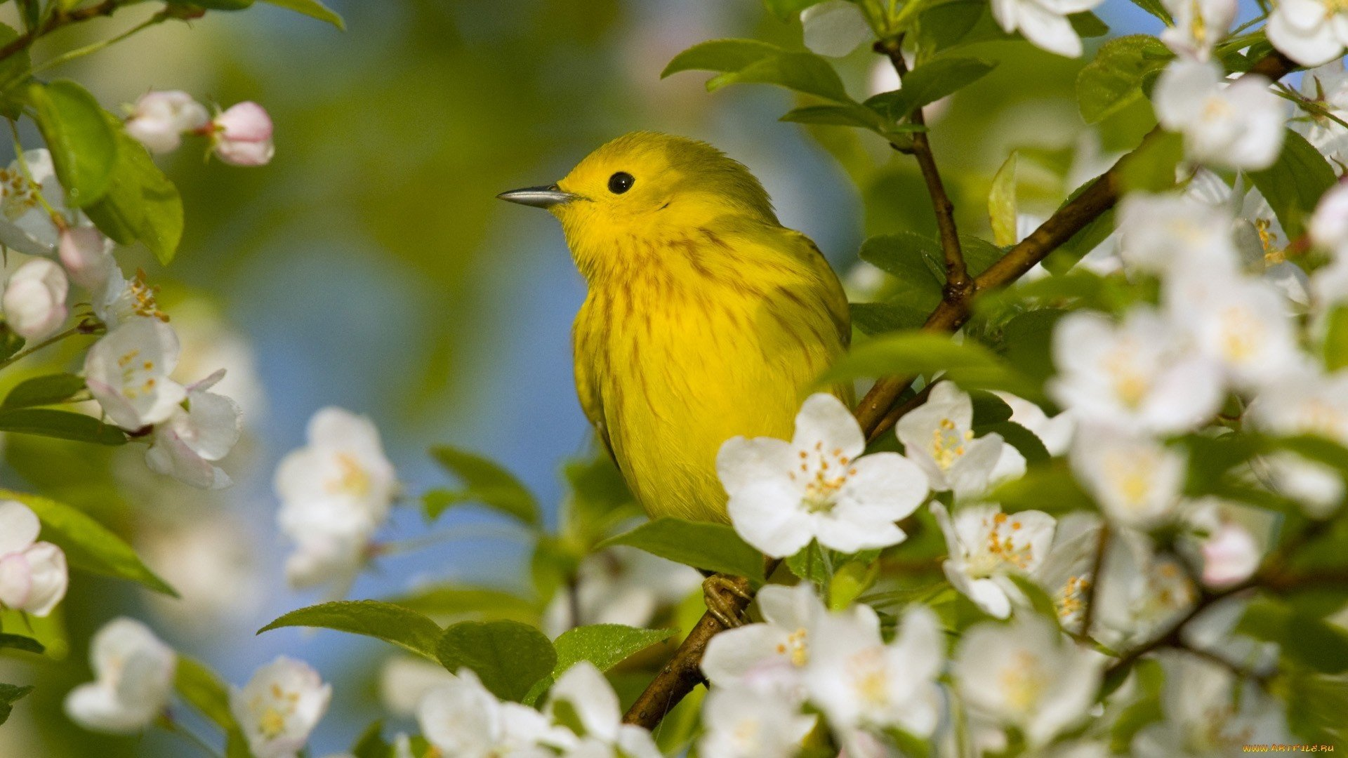 Download beautiful nature birds wallpapers gallery - Hd pics of nature with birds ...