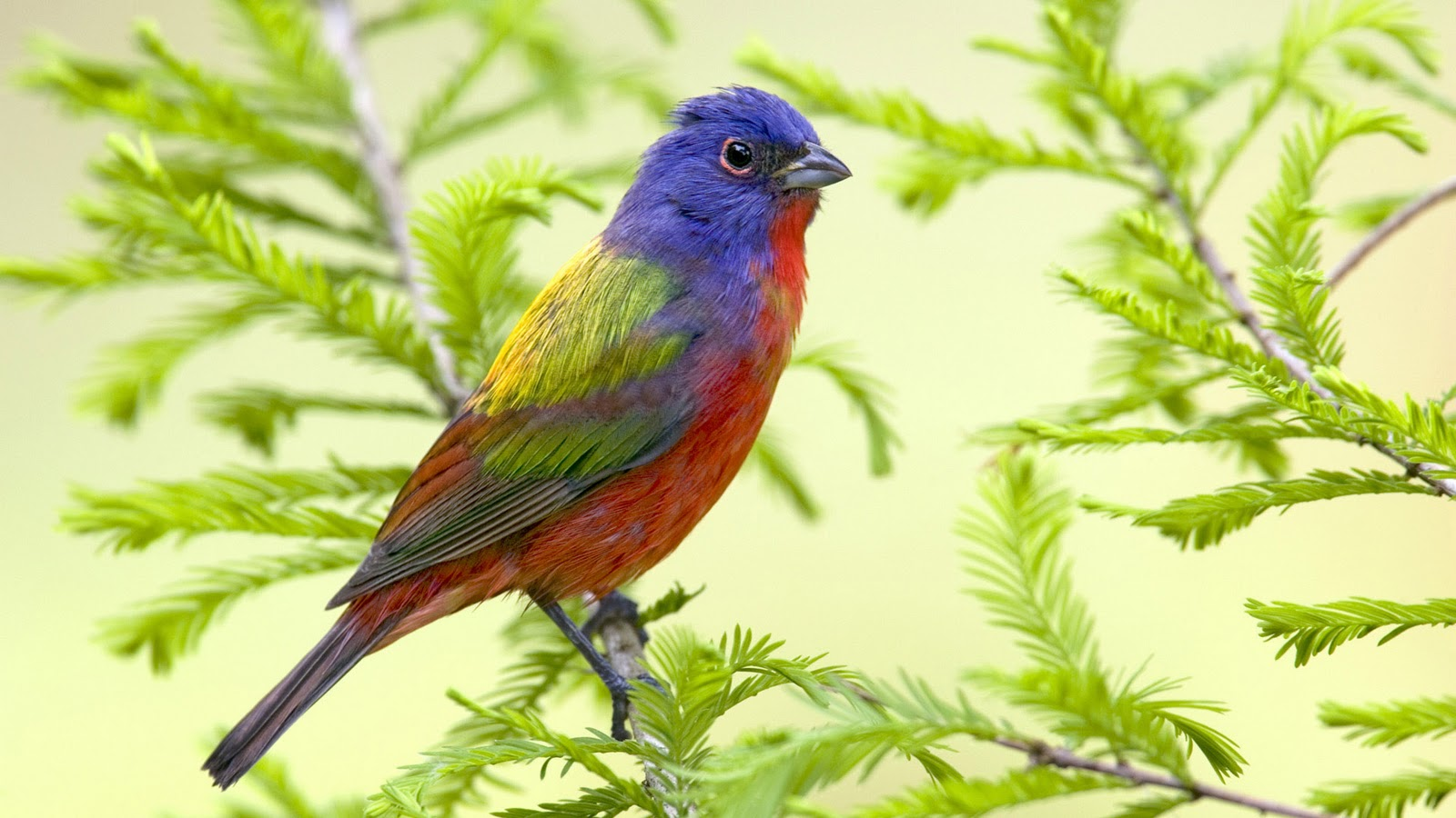 Beautiful Nature Birds Wallpapers