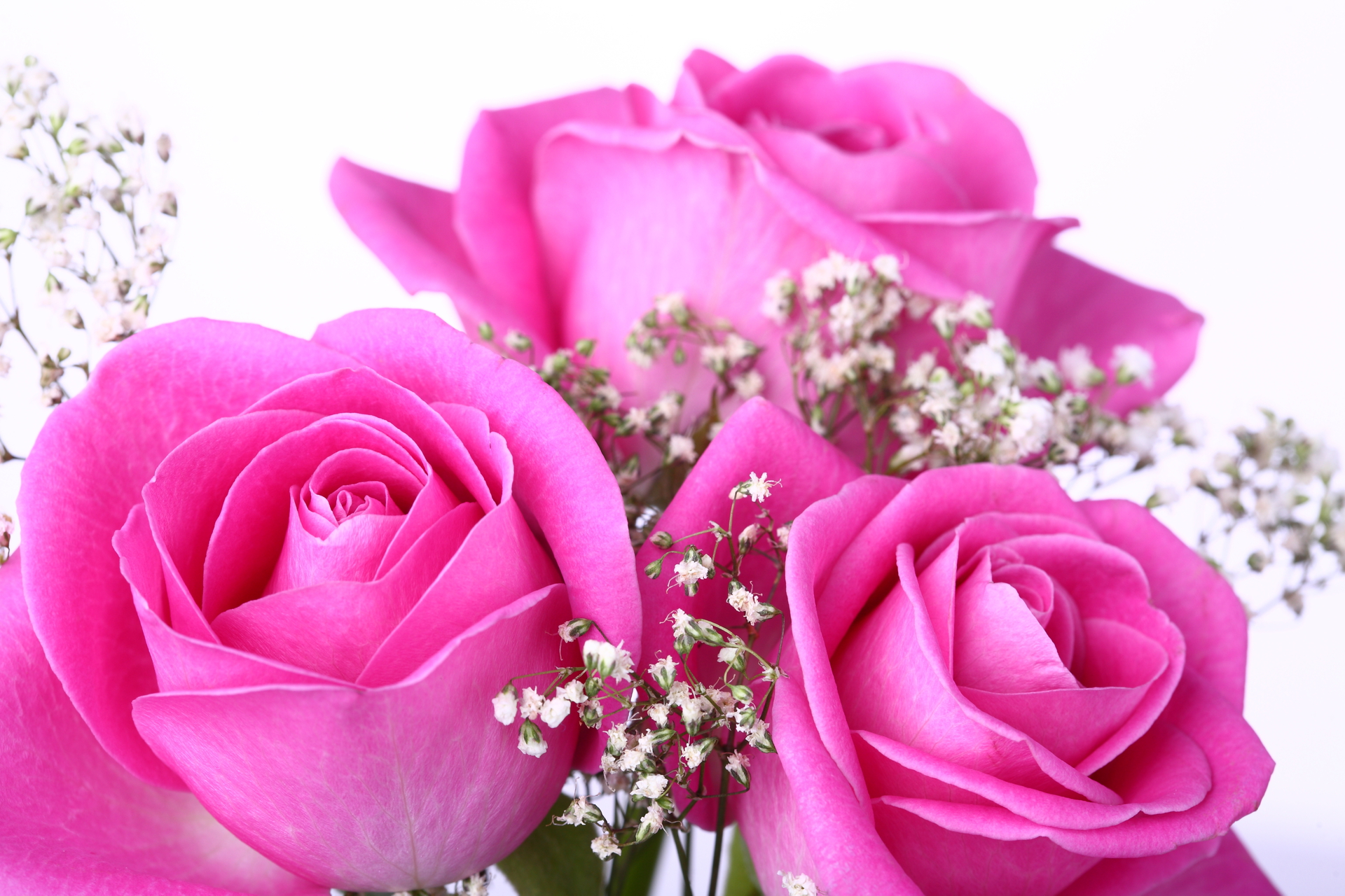 Beautiful Pink Roses Wallpapers Free Download