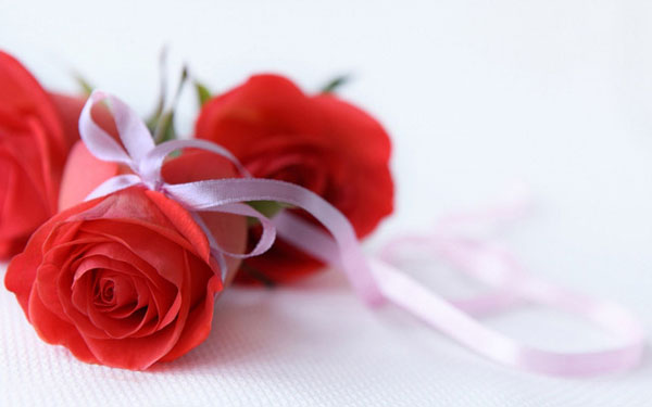 Beautiful Red Roses Wallpapers Desktop