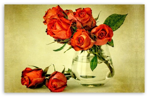Beautiful Roses Wallpapers For Mobile